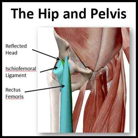 Module 4: Hip and Pelvis