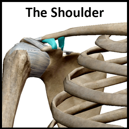 Module 2: The Shoulder